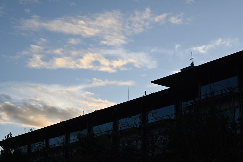 鴨川の夕景