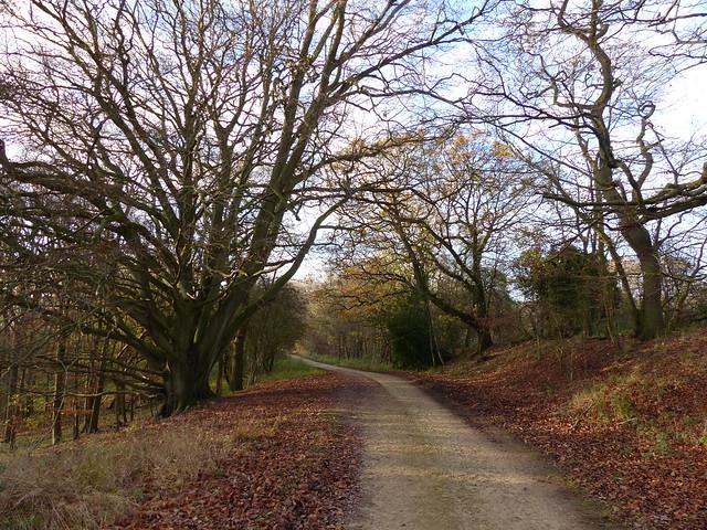 Wytham Woods Oxfordshire UK.