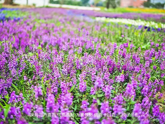 溪海休閒農業區 溪海花卉園區 桃園景點 大園景點 桃園一日遊