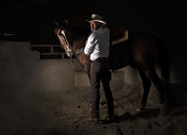 Horse at the stable