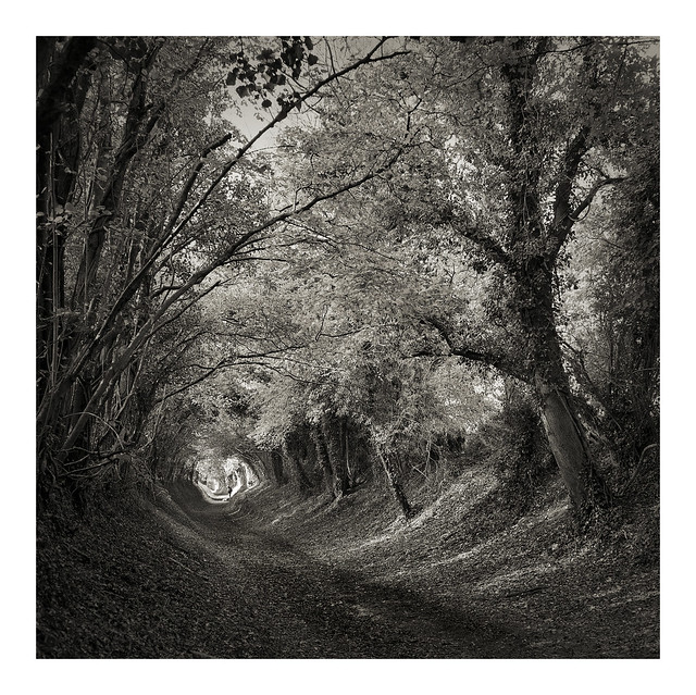 Halknaker Tree tunnel