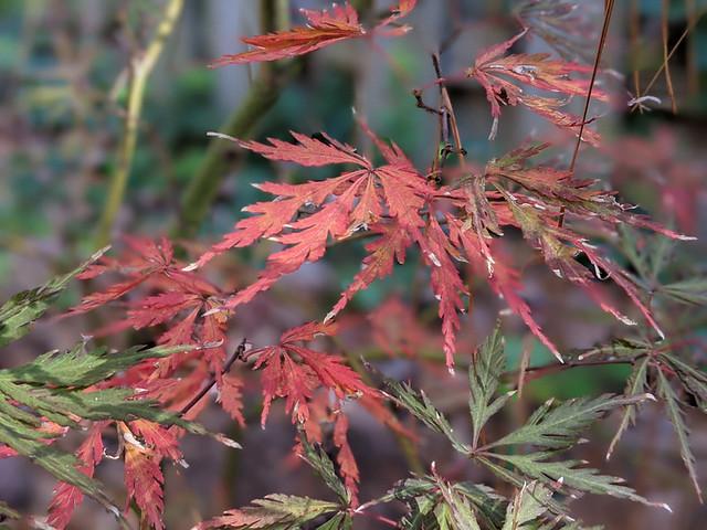 November 2020 foliage