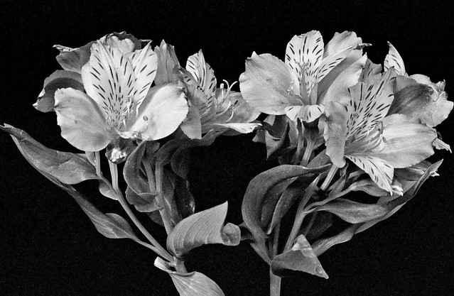 Flowers From a Bouquet II