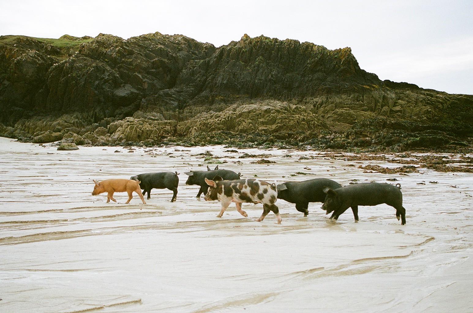 The Little Magpie Scotland Photo Diary North Coast 500 7