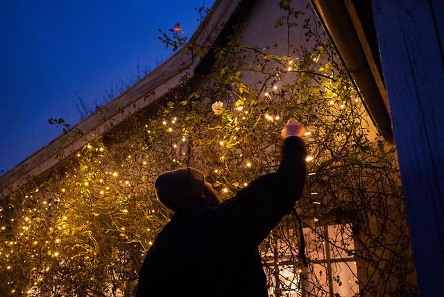 Hanging the Christmas lights (2)