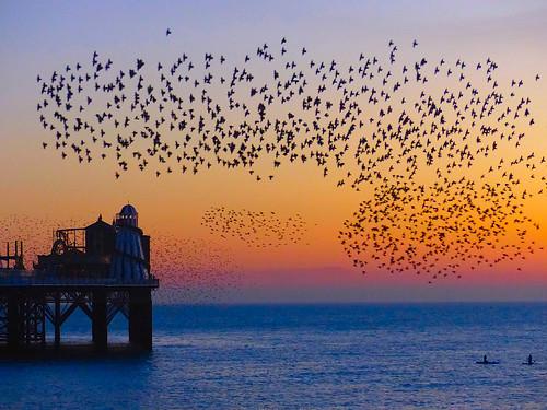 murmuration starlings birds englanduk englishchannel sea seafront pier palacepier water sunset