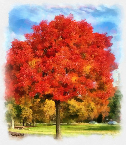 hss sliderssunday painterly autumn