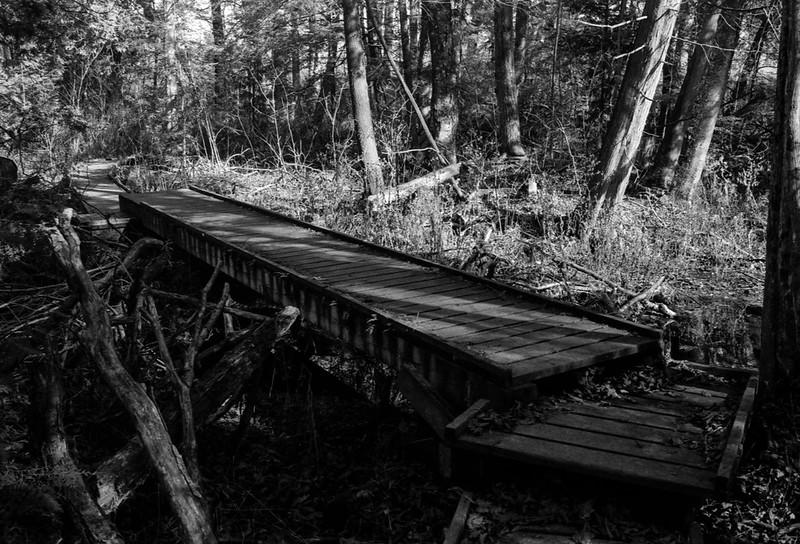 Brdige Along the Bruce Trail in Scotsale_