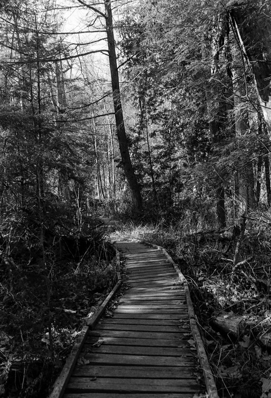Footbridge over the Muck and through the Trees_