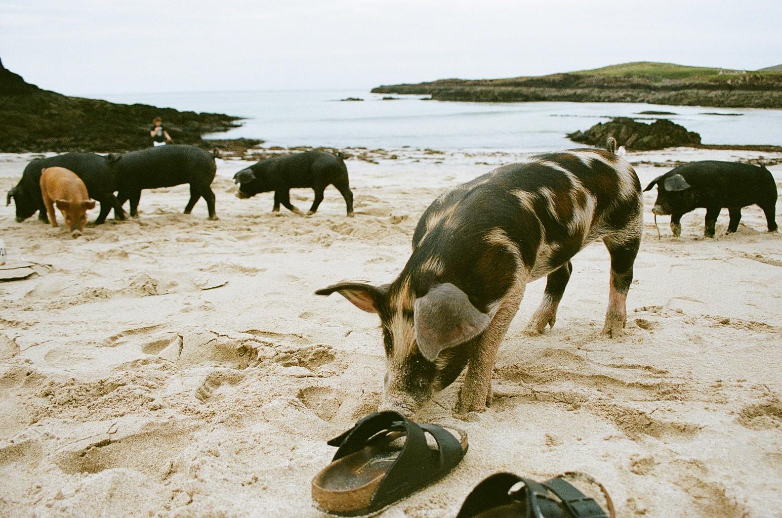 The Little Magpie Scotland Photo Diary North Coast 500 9