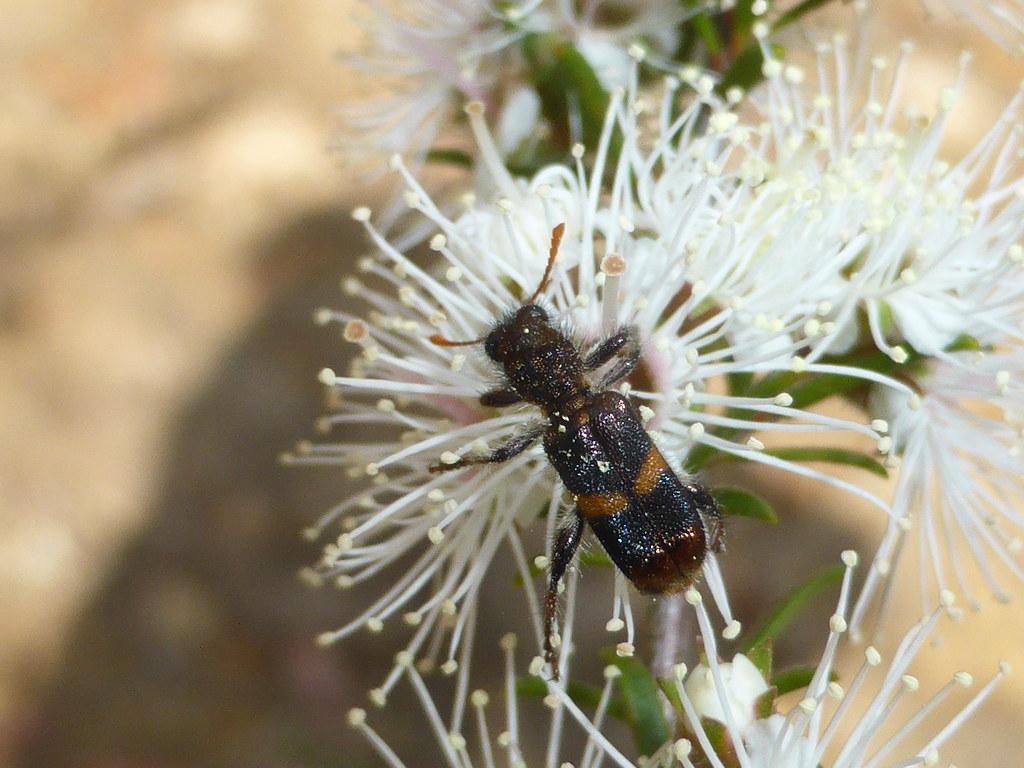 Beetle Business