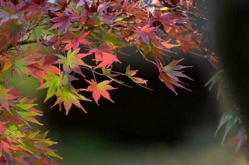 Taken in North Kamakura