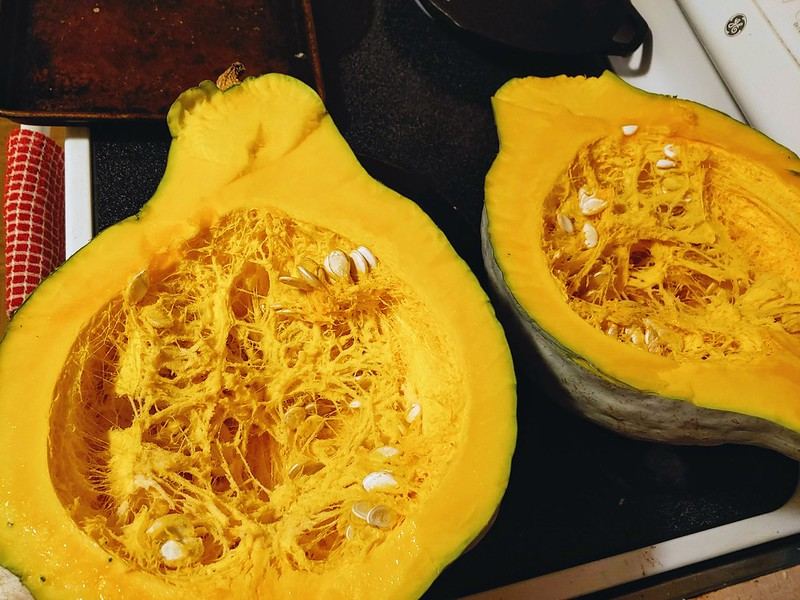 Gutting the 16.5 lb Blue Hubbard Squash