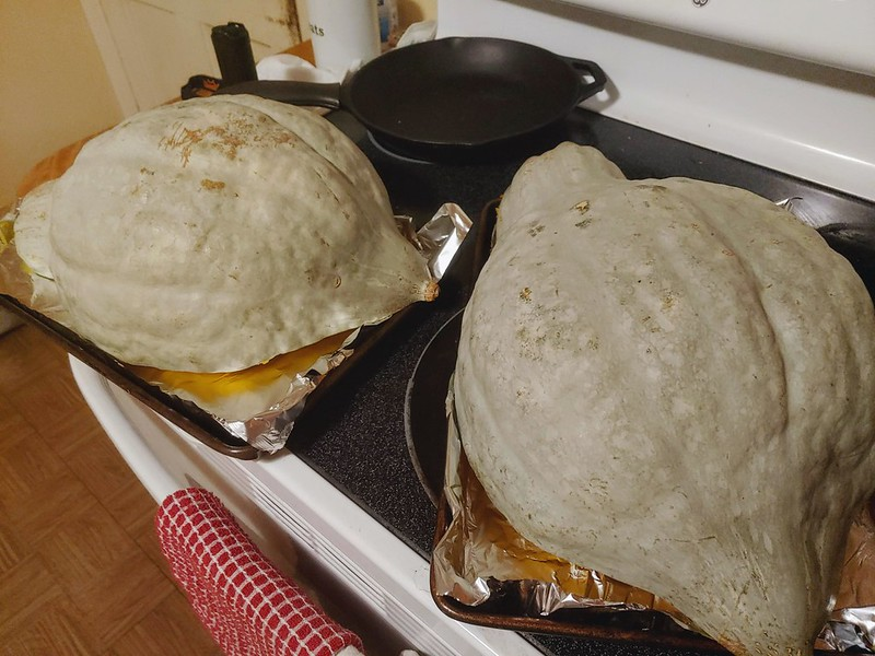 Baking the 16.5 lb Blue Hubbard Squash