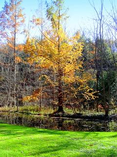 Azalea Meadow