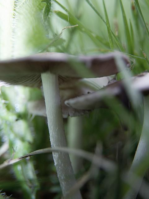 hunting Mushroom