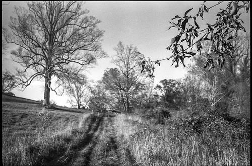 landscape biltmore biltmoreestate hillside dirtroad trees branches leaves asheville northcarolina minoltaxgm superalbinon28mmf28 primelens aristaedu200 moerschecofilmdeveloper 35mm 35mmfilm film analog monochrome monochromatic blackandwhite