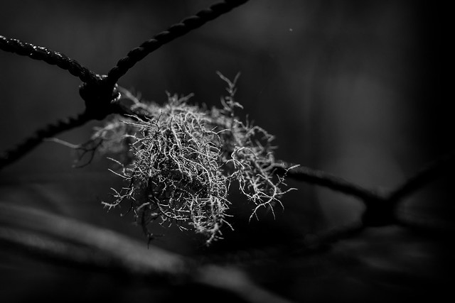 Lichen the light