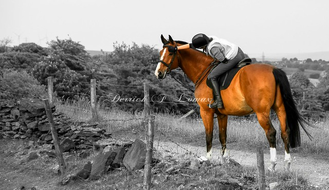 horse on a hack in birtle lancs