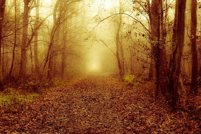 late autumn /// Spätherbst
