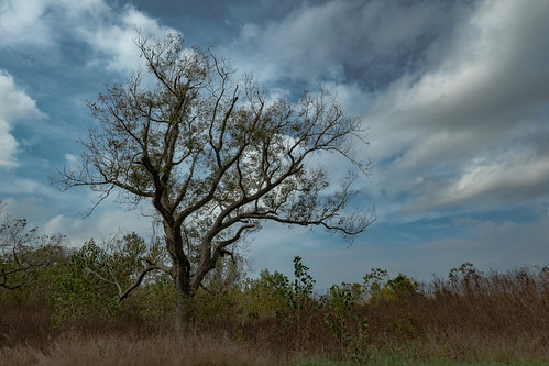 nature sky landscape clouds tree sugarland texas prairie leaves leica clux