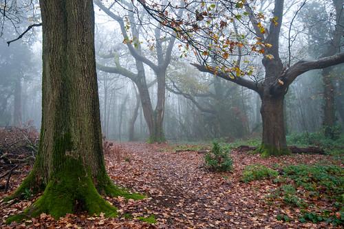clevedon clevedoncourtwoods somerset england uk woods mist misty autumn trees landscape leaves