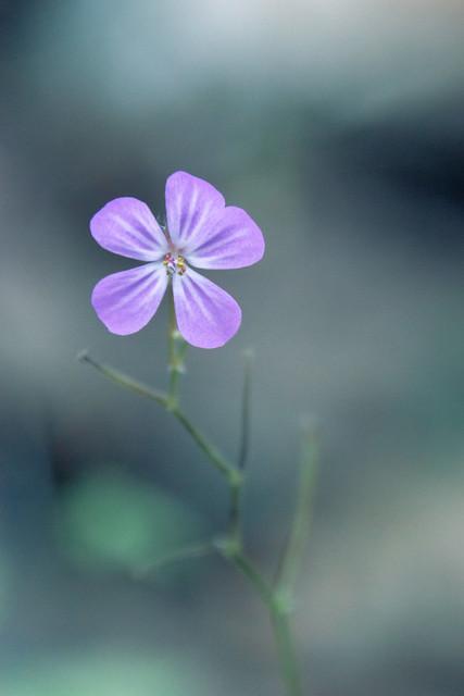 Tiny Beauty in the Forest / Petite Beauté dans la Forêt