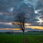 29. November 2020 - 0:14 -  A lone tree in West Kilbride. Very different looking from the last time I was here. I could hardly get through the field for barley.  I made a last minute decision to go out for sunset but I couldn't decide on a location. So I ended up here then attempted to move to another spot, ran out of time and missed the best of the light. When I got home I stuck this on the computer though and was quite happy with how it turned out.