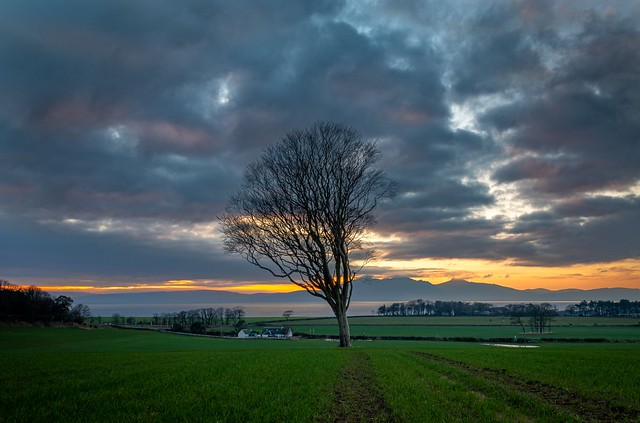 The West Kilbride Tree