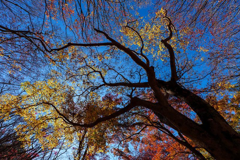 Autumn Sky in Japan