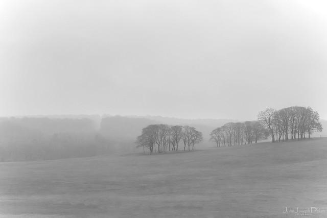 november mist | temple newsam