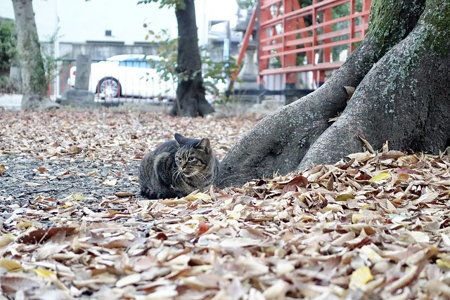 Today's Cat@2020−11−29