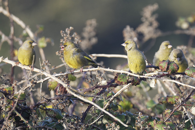 The Greenfinch crew
