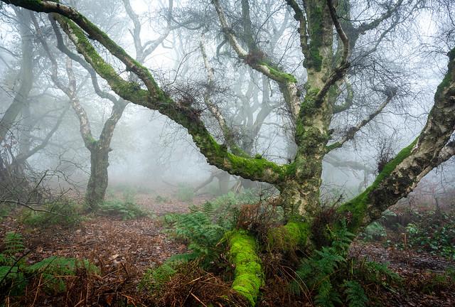 Bulkeley Hill Wood