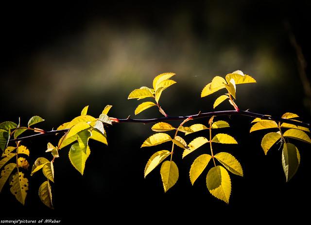 letzte Herbstblätter
