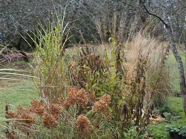 Grasses in Garden Bed