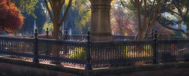 Glowing Morning Backlit Autumn Scene