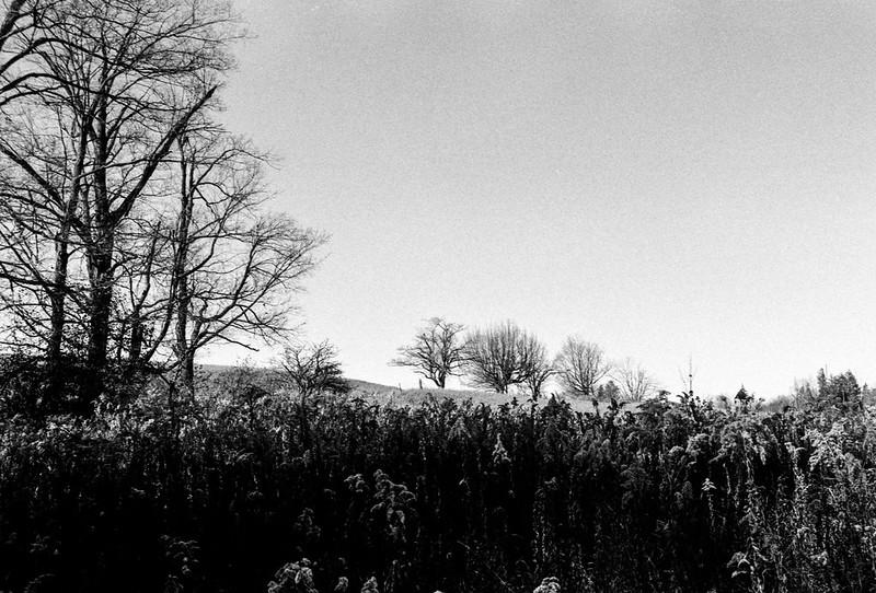 Edge of Late Fall Meadow