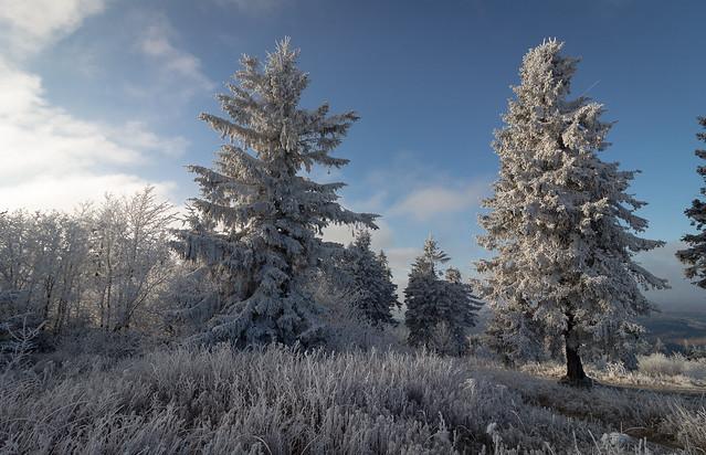 Großer Feldberg mit Frost