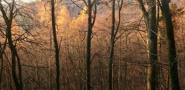Felsenland Wald