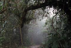 Los Angeles Cloud Forrest, Costa Rica 008.20n