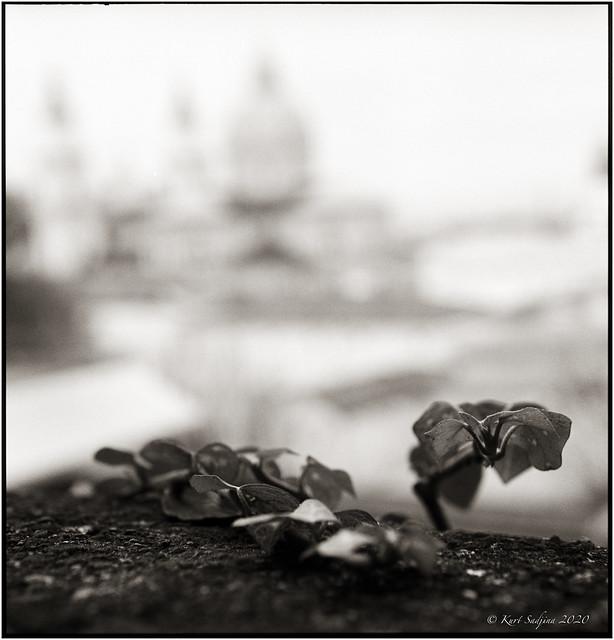 Blätter vor dem Dom_Lockdown2_Rolleiflex 2.8E