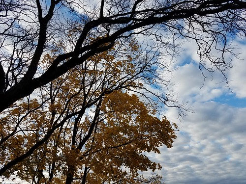 Fall fluttering by on the Hudson, 2020-11-27