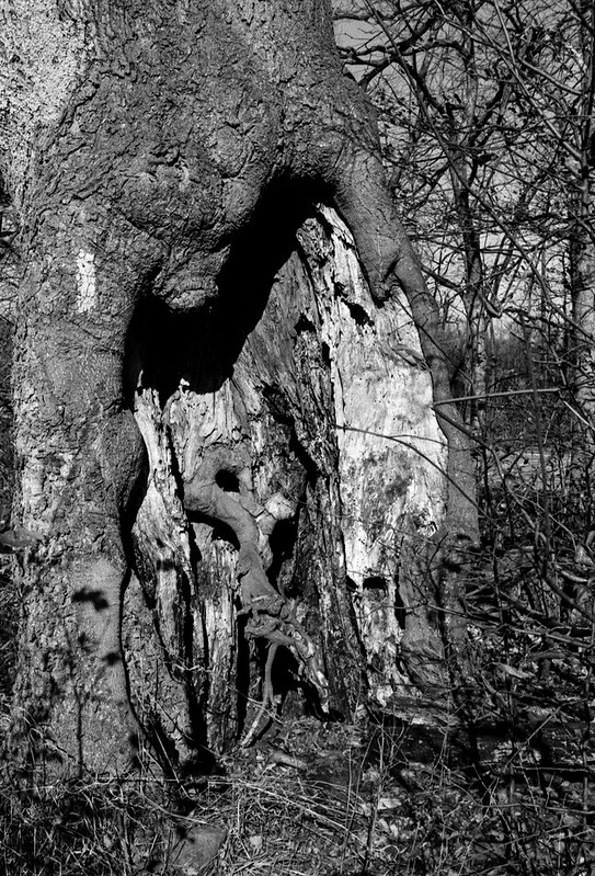 Major Hole in the Tree