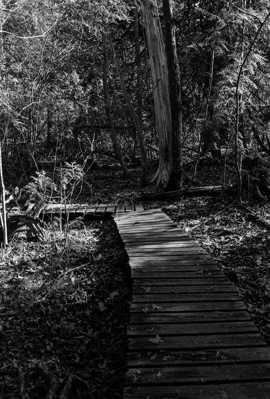 Right Angled Wooden Path