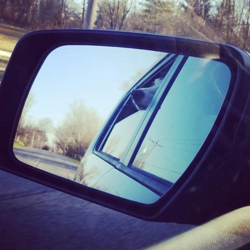 Mirror hound #Cane #dogsofinstagram #greyhound #greyhoundsofinstagram