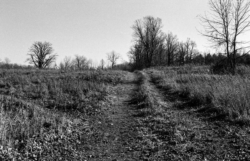 Path Straight Into the Meadow
