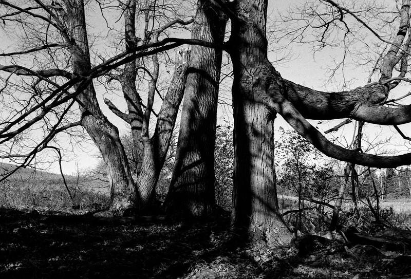 Tree Trunks as Sculpture