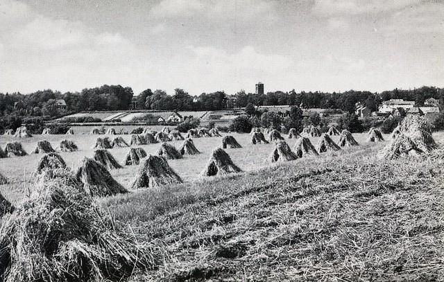 Heelsum oogst v a de Noordberg naar Patrimoniumweg Ansichtkaart heruitg Boekh de Jong ca 1955 niet gelopen Coll HGR