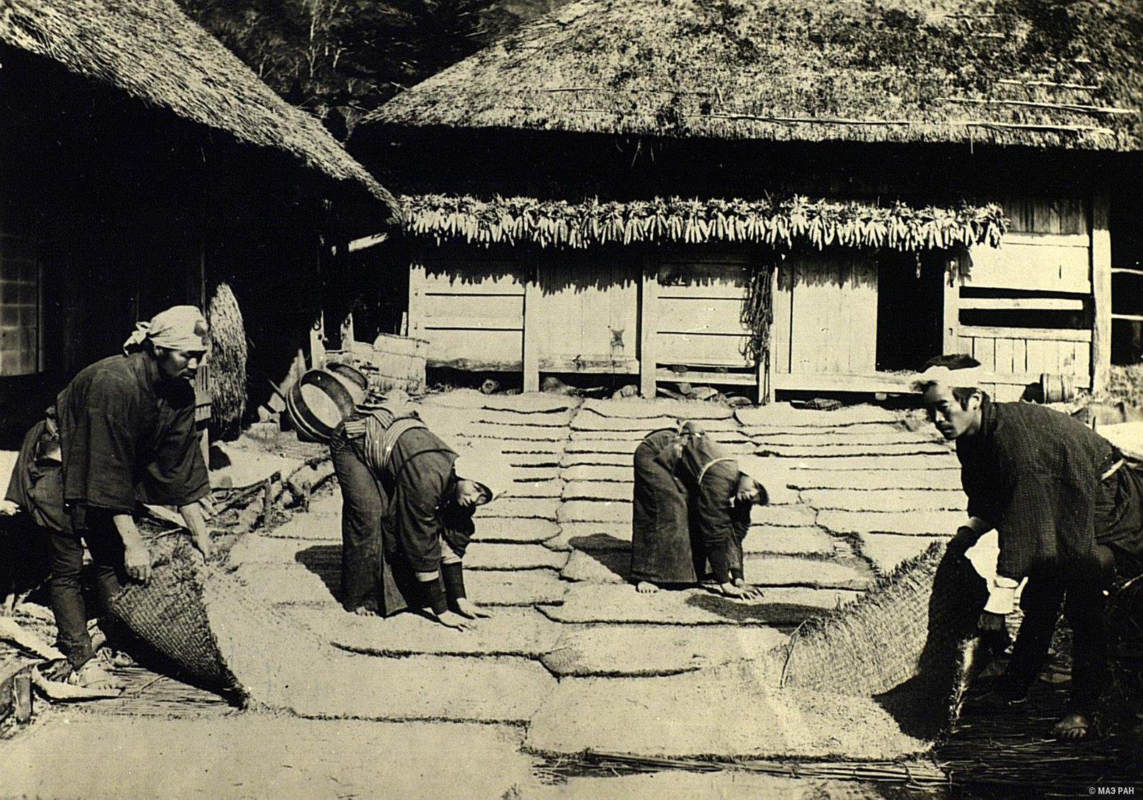 14. Просушка пшеницы на расстеленных циновках